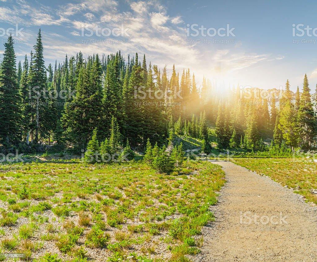 winding trail to MT.Rainier stock photo