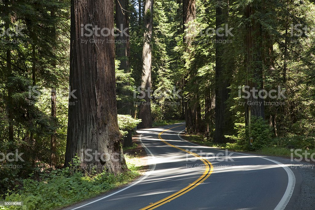Winding wooded road through forest stock photo