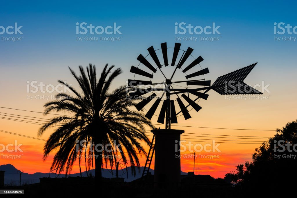 Windmill and Palm Tree on Countryside in Mallorca at Sunset stock photo