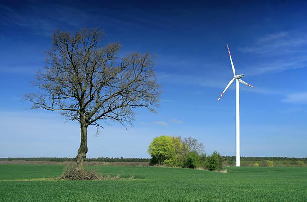 Windmühle und Baum – Foto