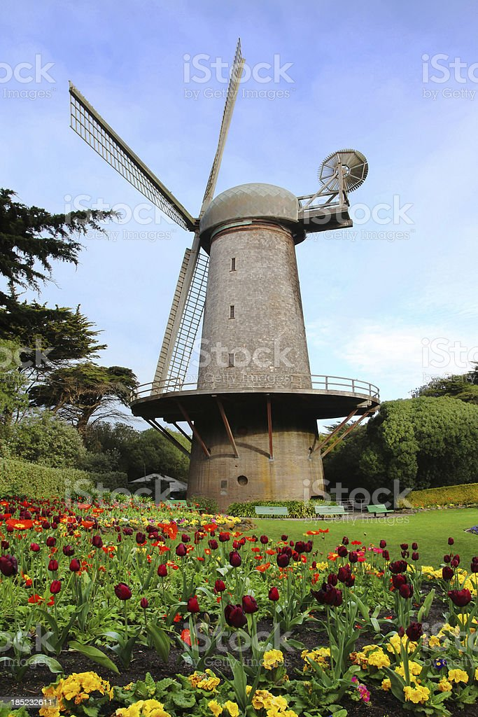 Windmill and Tulips Garden stock photo