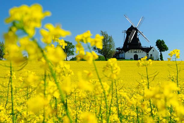 windmill in a field in kronetorp, skane, sweden - skåne bildbanksfoton och bilder