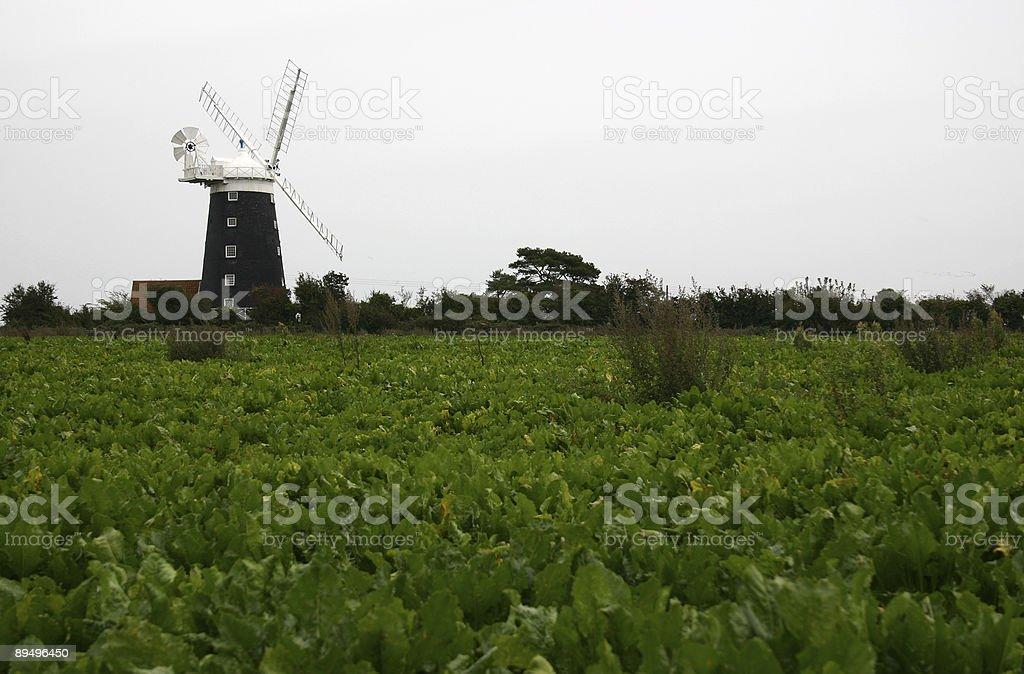 Wiatrak w terenie, Norfolk, Wielka Brytania zbiór zdjęć royalty-free