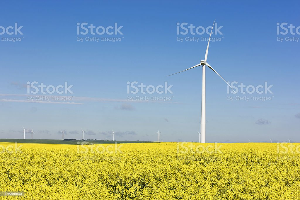 Windmill in Canola royalty-free stock photo