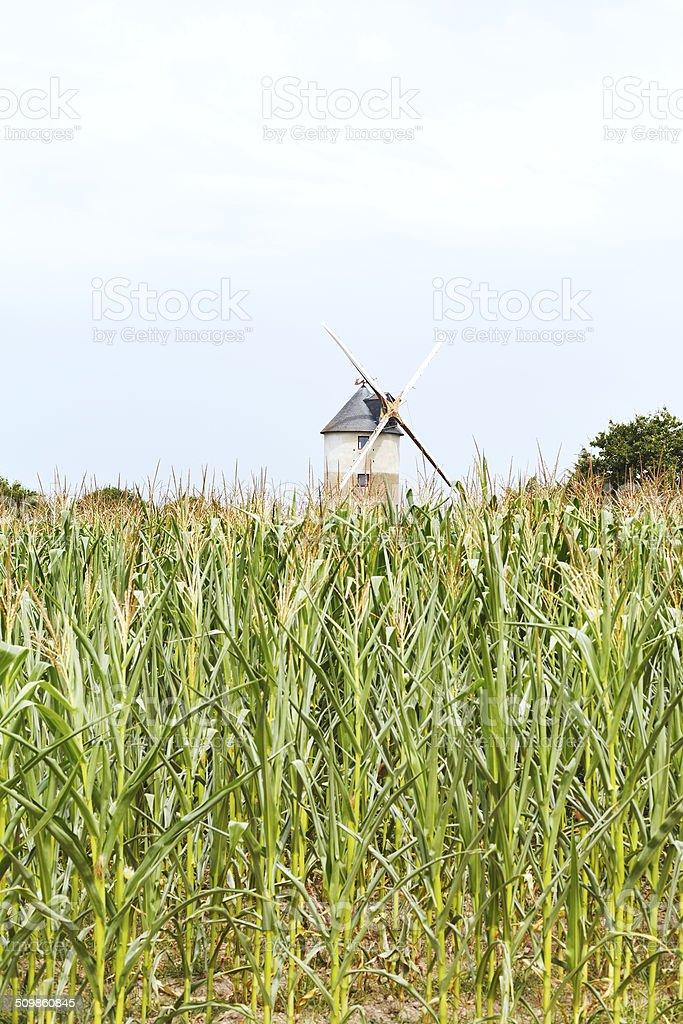 windmill in cornfield, France stock photo