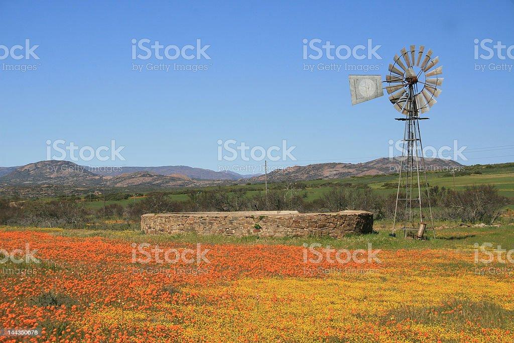 Windmill in Namaqualand stock photo