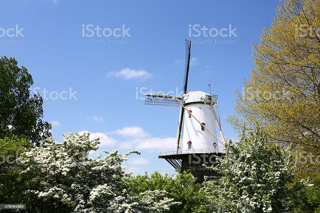 windmill in netherlands (Veere, Zeeland) stock photo