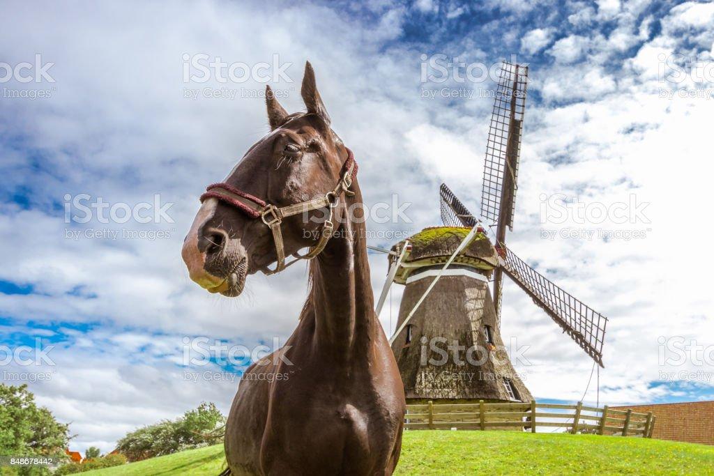 Windmühle mit Pferd, Ameland, Niederlande – Foto