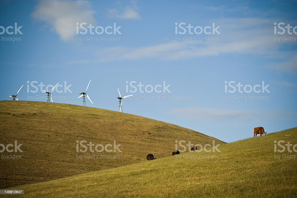 Windmills and Cows On the Hills stock photo