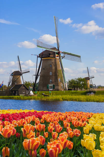 Windmills and flowers in Netherlands stock photo