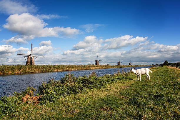 windmills and goat - ziegenhof stock-fotos und bilder