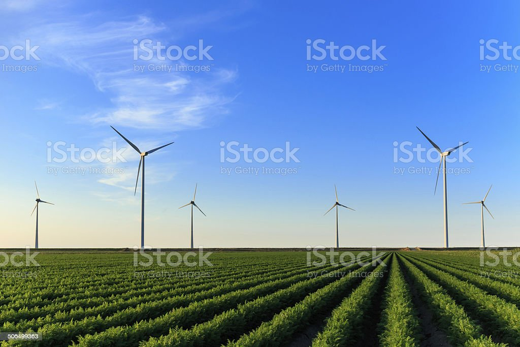 Windmills at field of crops stock photo