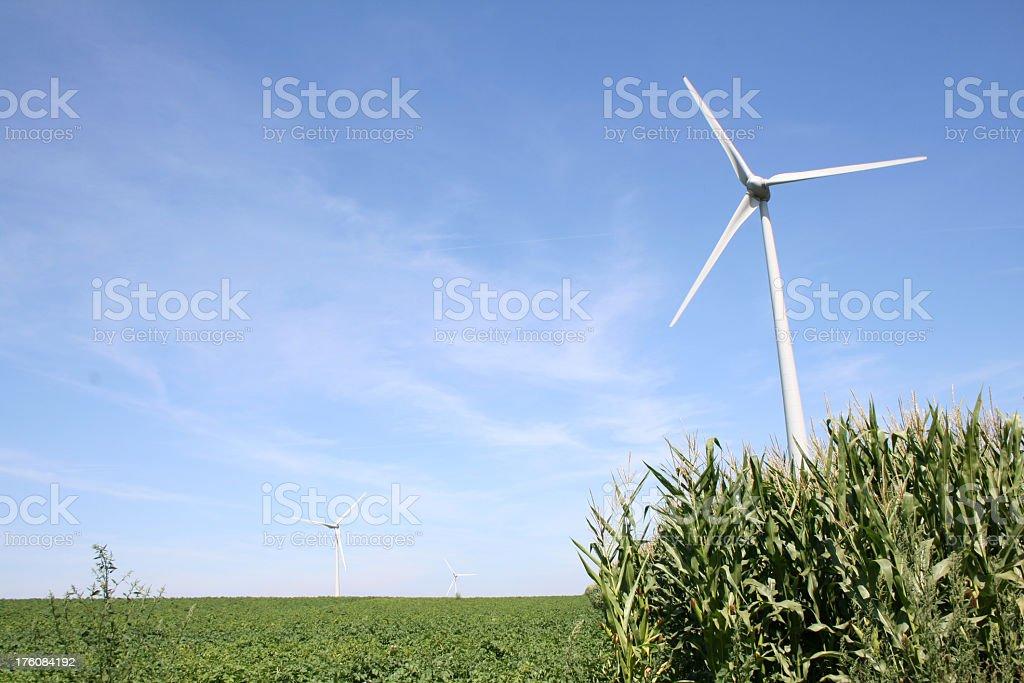 Windmills in Belgium royalty-free stock photo