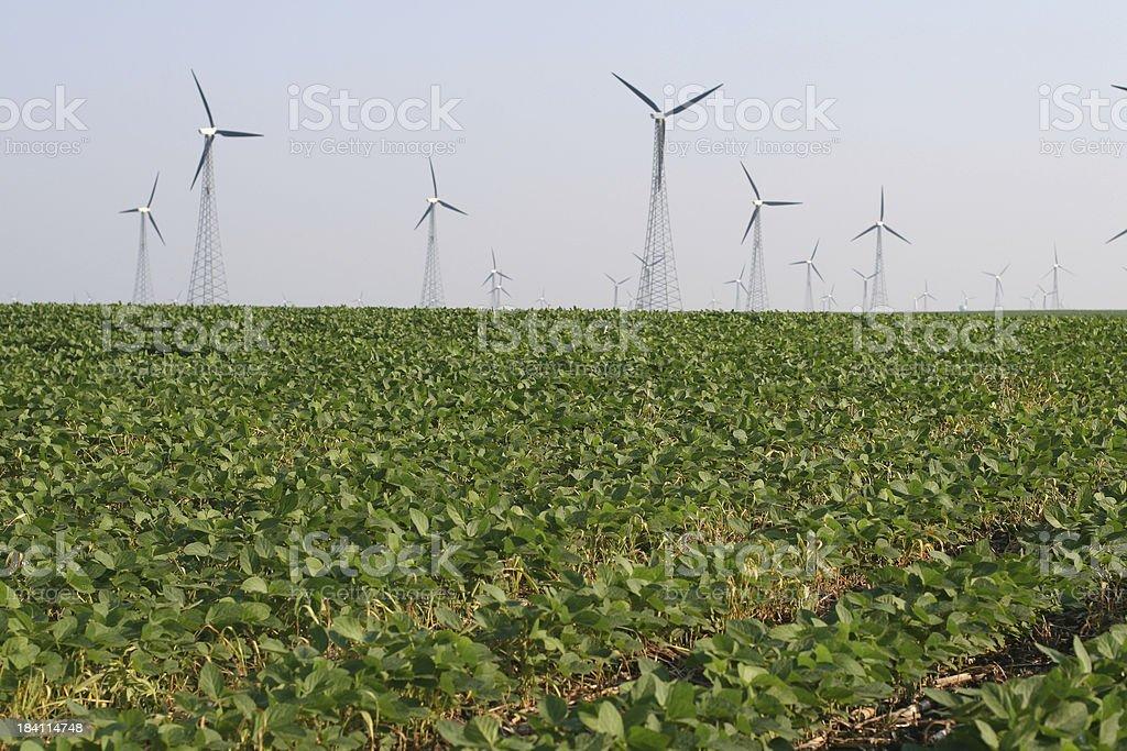 Windmills in Soybean Field royalty-free stock photo