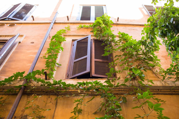 window and ivy - low angle view foto e immagini stock