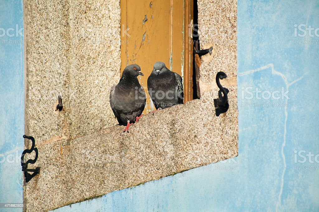 Window and pigeons royalty-free stock photo