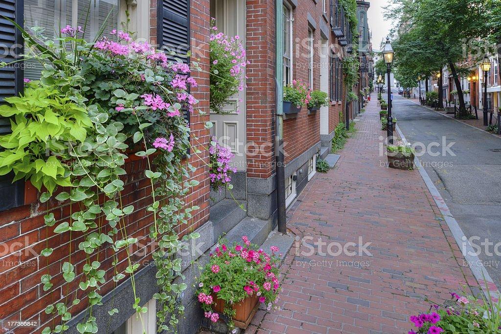 Window Box and Brownstones stock photo