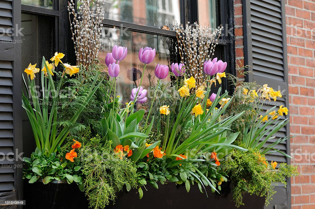 Window Box Flower Arrangement stock photo