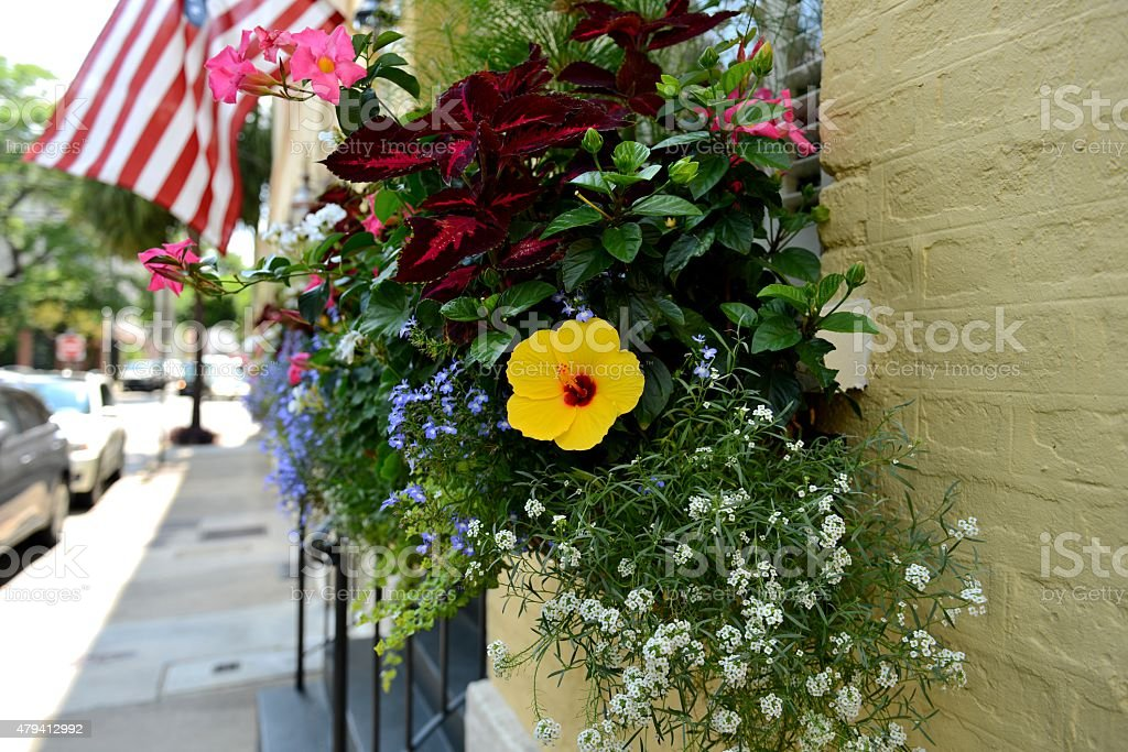 Window Box Flowers stock photo