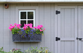 A window box overflowing with purple and pink flowers  in front of a white window on a grey shed. There's room on the right for text.