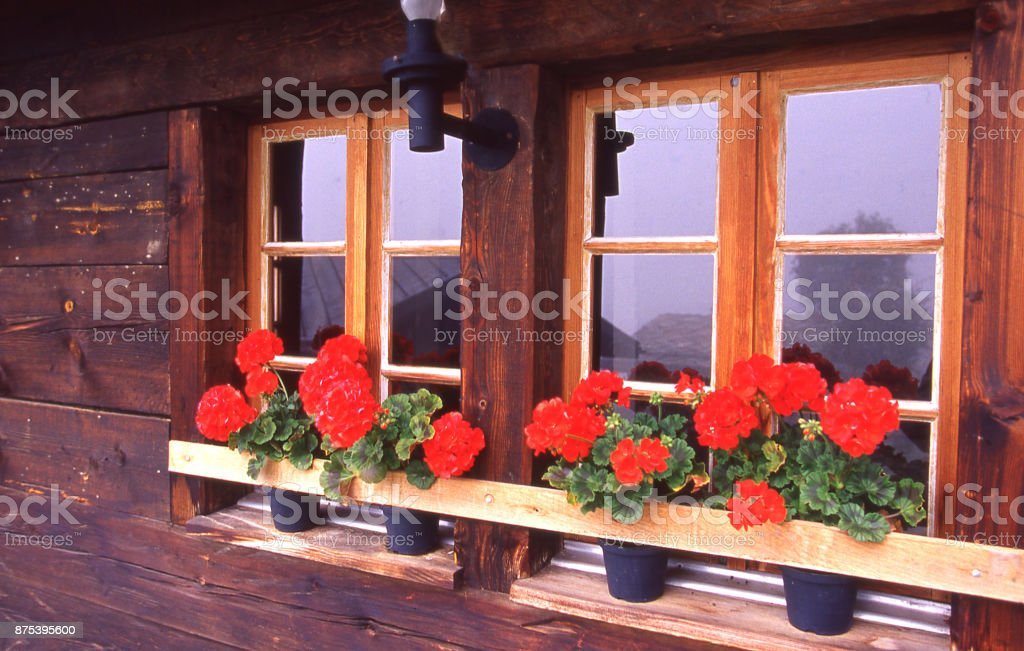 Window boxes and bright geranium flowers on chalet in the Swiss Alps near Bergun Switzerland Europe stock photo