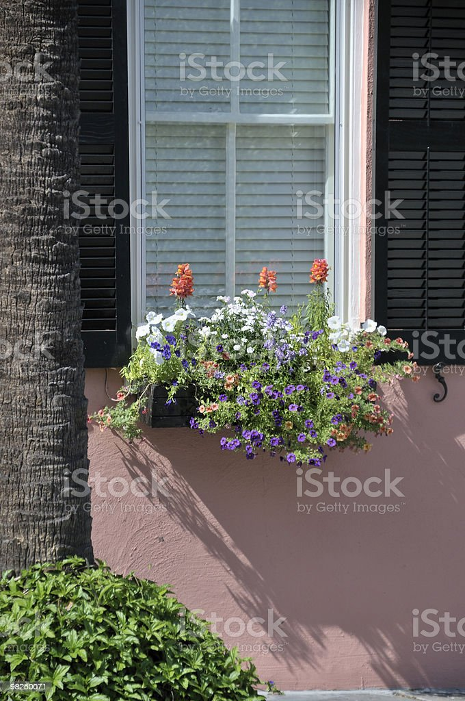 Finestra, Charleston, Carolina del Sud foto stock royalty-free