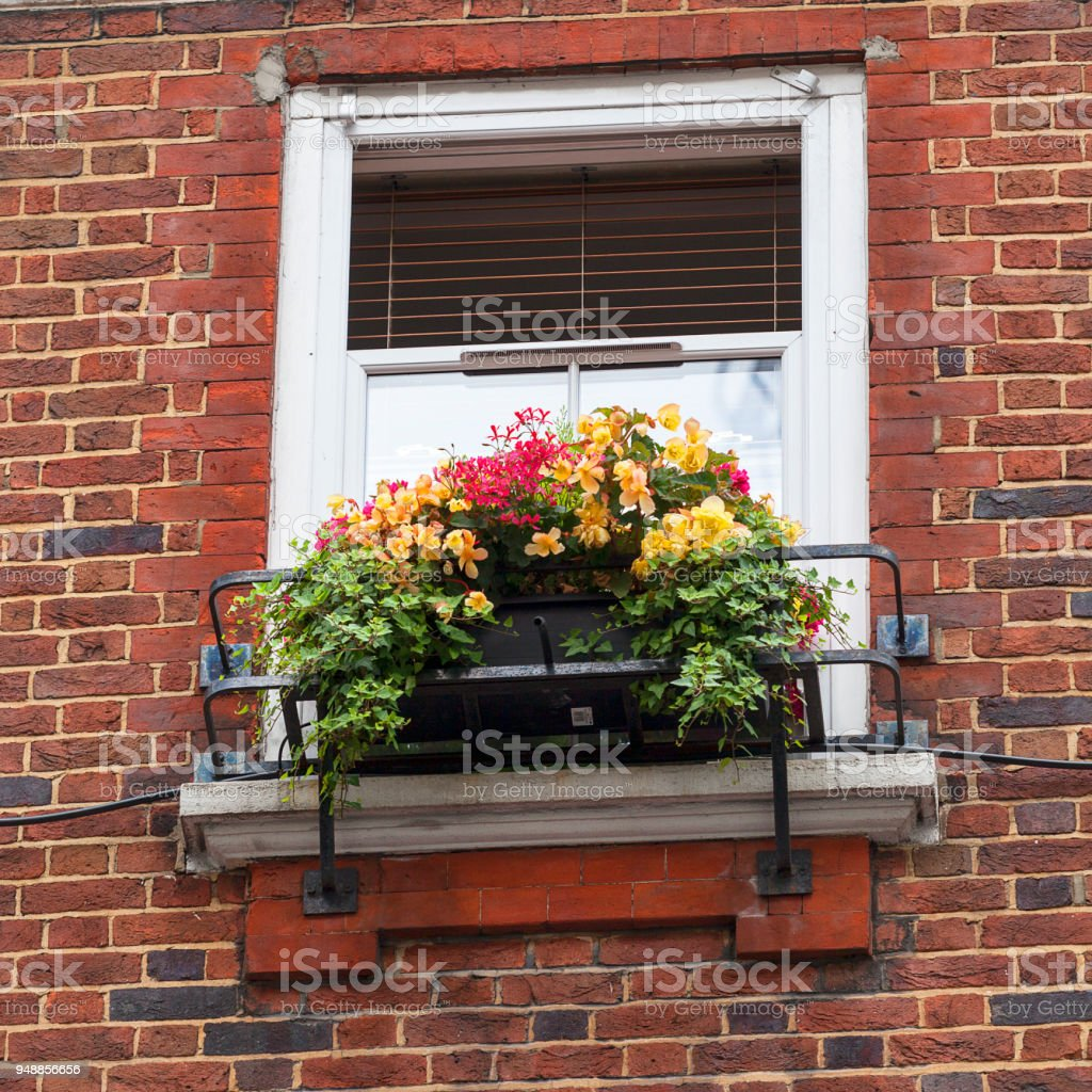 Window decorated with flowers, decorative greenery, typical view of the London street, London, United Kingdom. stock photo