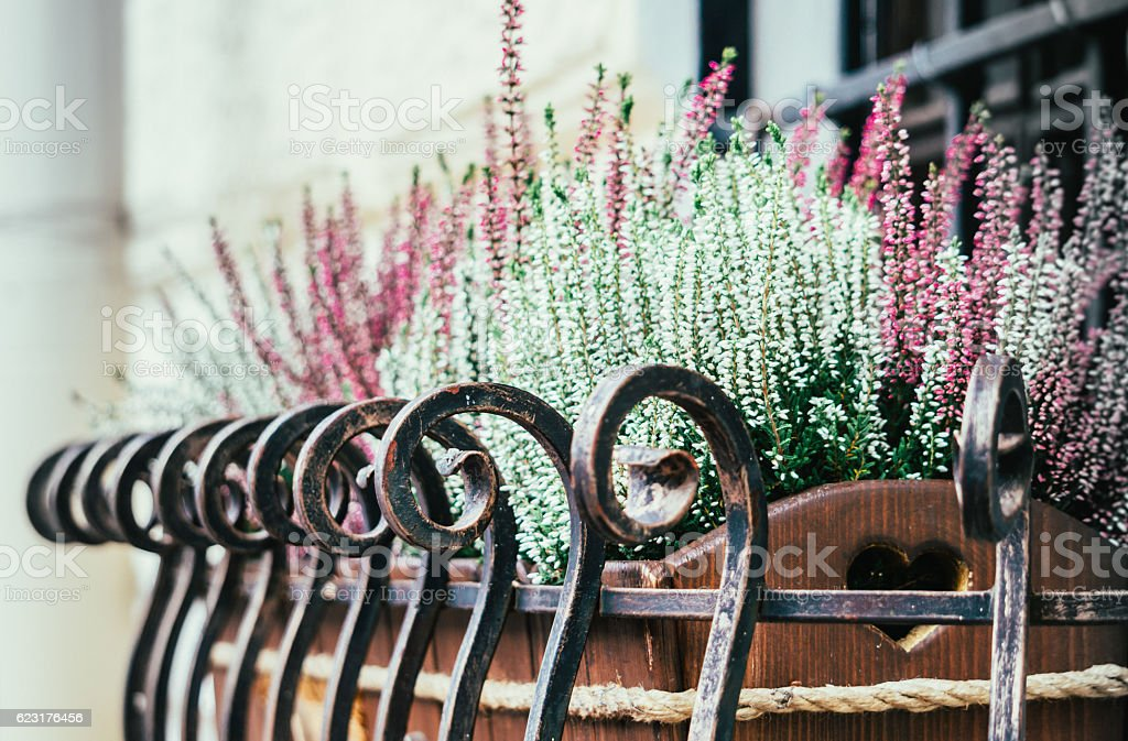 Window decoration. Flower pot with lavender flowers on the windowsill stock photo