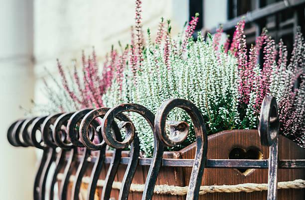 window decoration. flower pot with lavender flowers on the windowsill - fensterdeko herbst stock-fotos und bilder