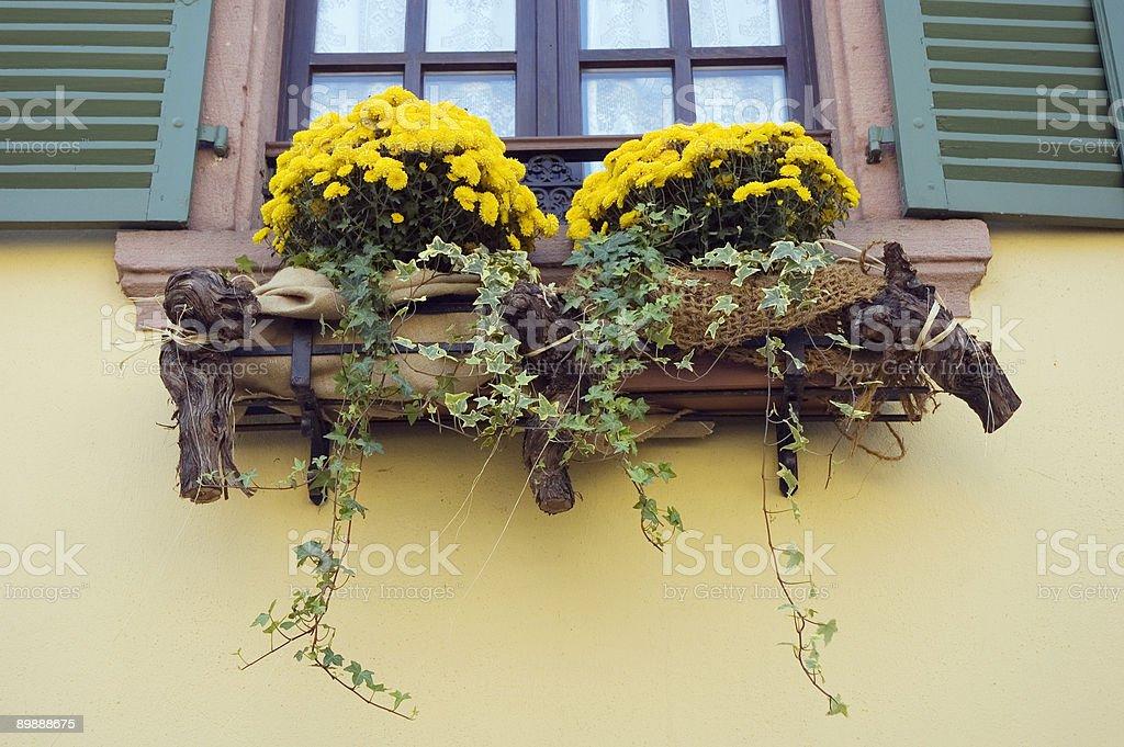 Window Flowers Decoration royalty-free stock photo