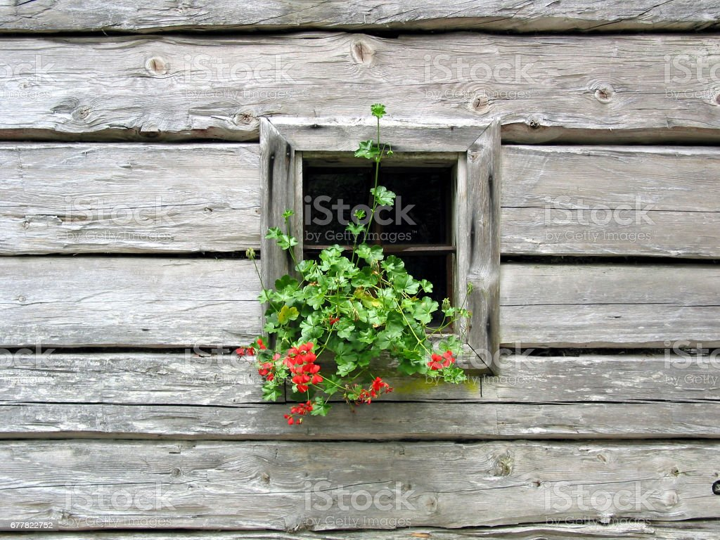 window of a log house royalty-free stock photo
