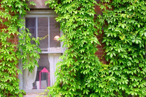 Window of historic house
