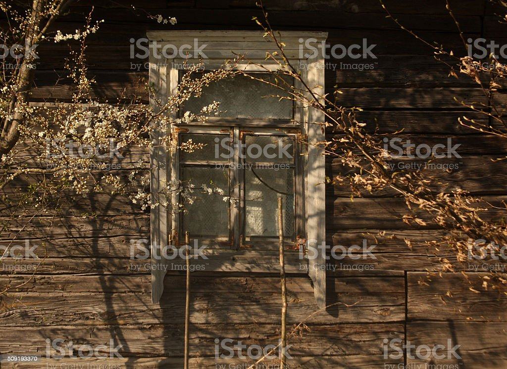 Window of old log house and tree in blossom. stock photo