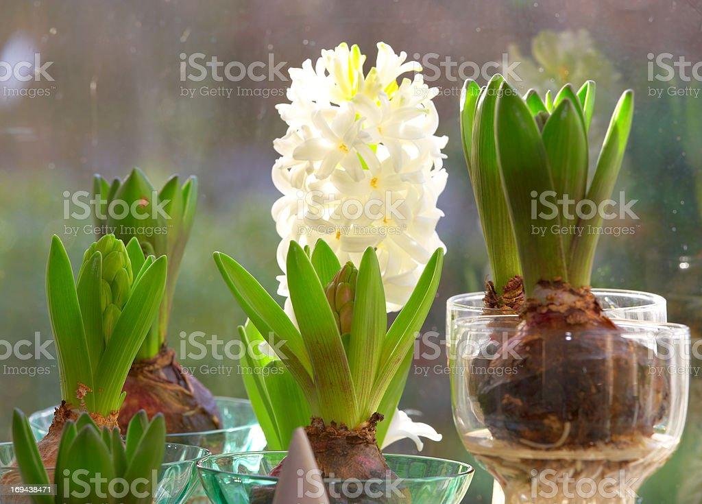 Fenster Pflanzen – Foto