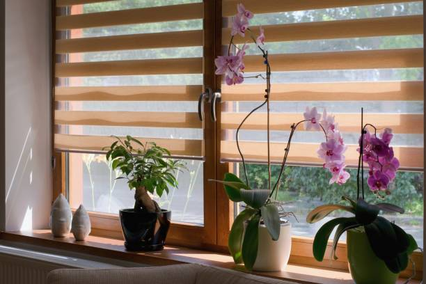 window roller, duo system day and night. morning light shining through the window. - estore imagens e fotografias de stock