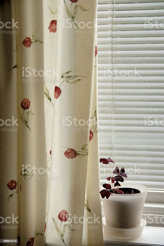 Window shaded with jalousie royalty-free stock photo