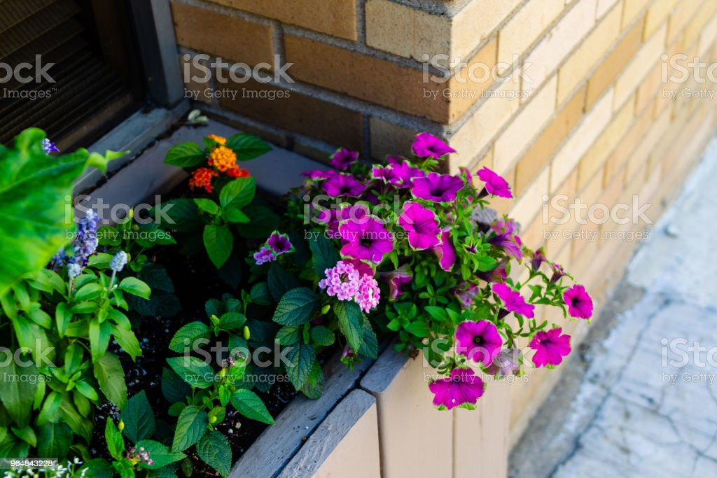 window sill flower box on a downtown office building royalty-free stock photo