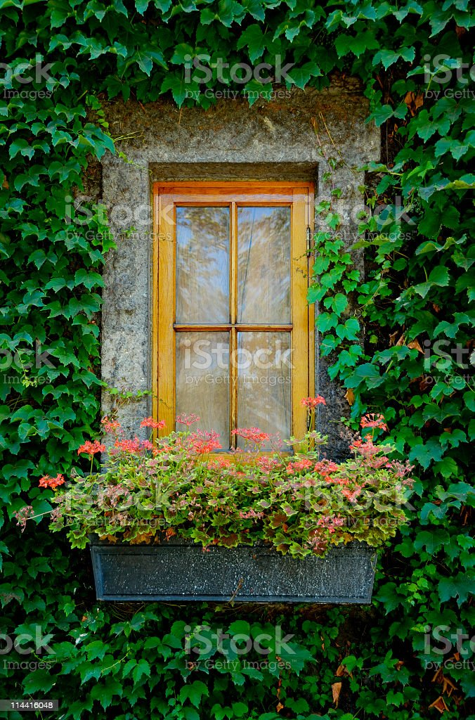 Window Surrounded by Ivy royalty-free stock photo