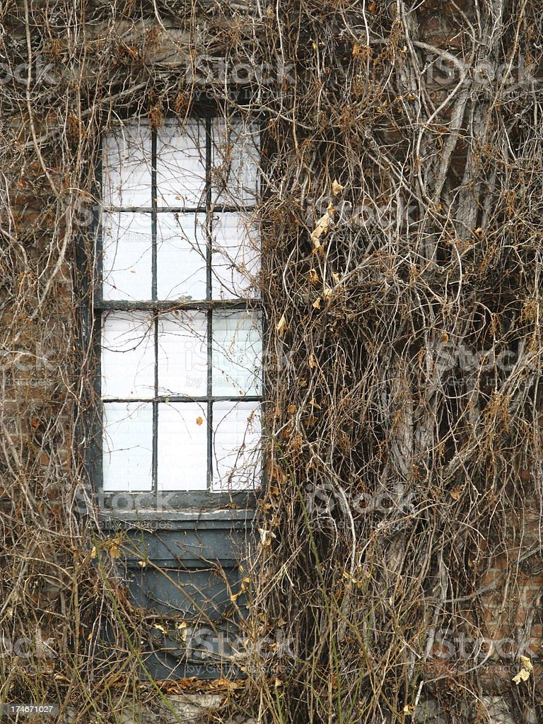 Window Surrounded  Dormant Ivy royalty-free stock photo
