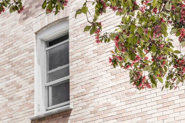 Window with a view over a blooming tree stock photo
