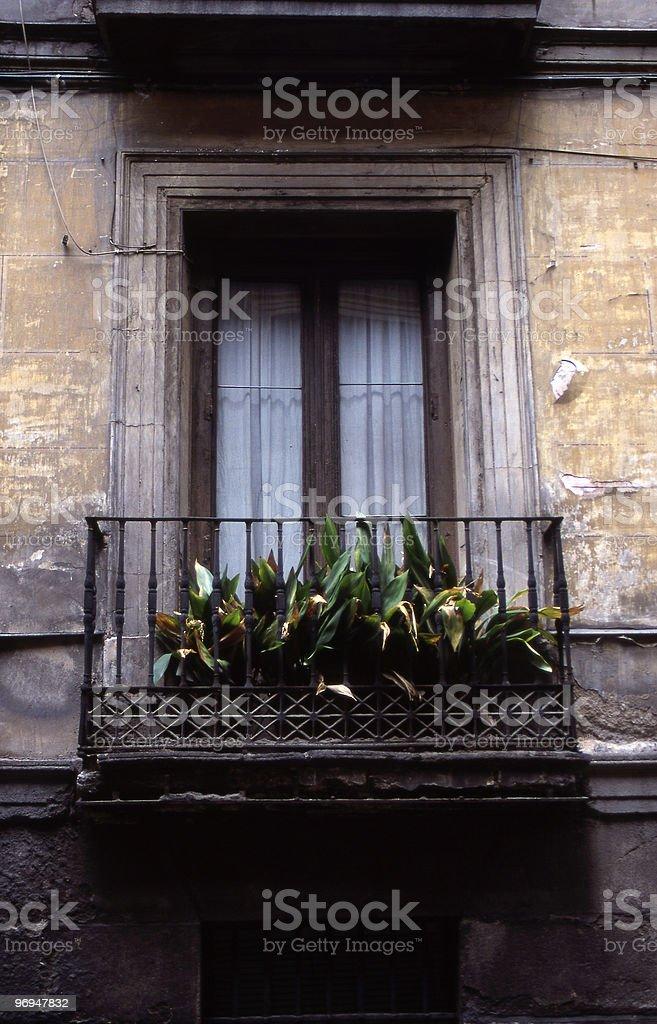 Window with aspidistra royalty-free stock photo
