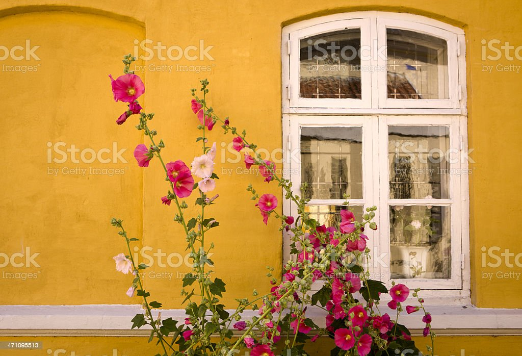 Window with Hollyhock stock photo