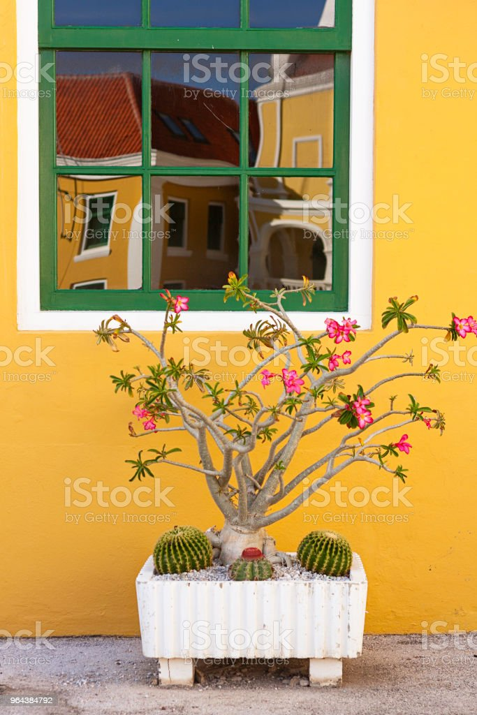 Janela com reflexão, arquitetura colonial, origens de Curaçao, Caribe colorido - Foto de stock de Amarelo royalty-free