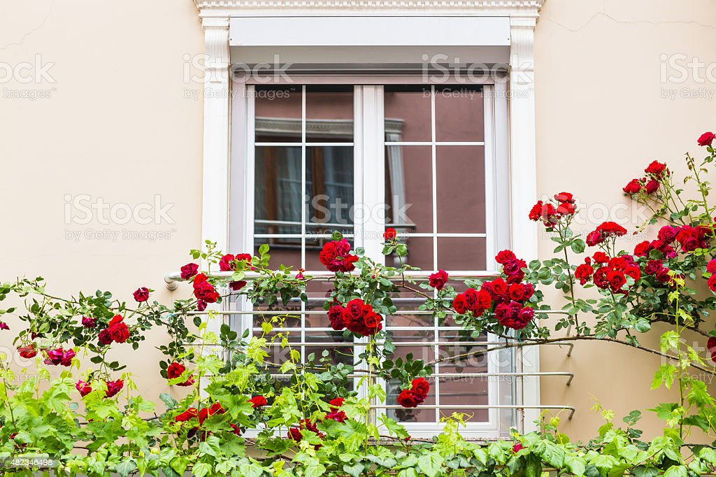 window with roses stock photo