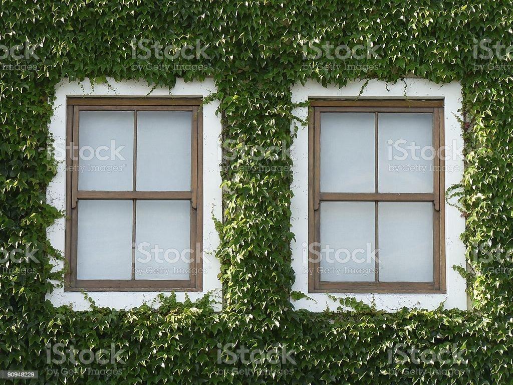 Windows and Ivy 02 stock photo