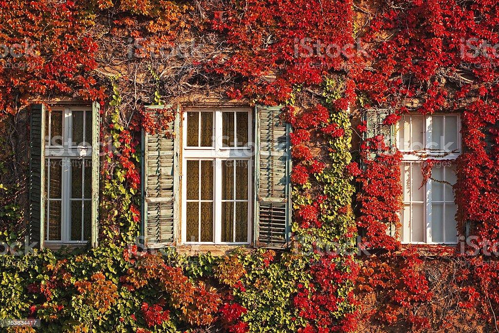 Windows at autumn royalty-free stock photo