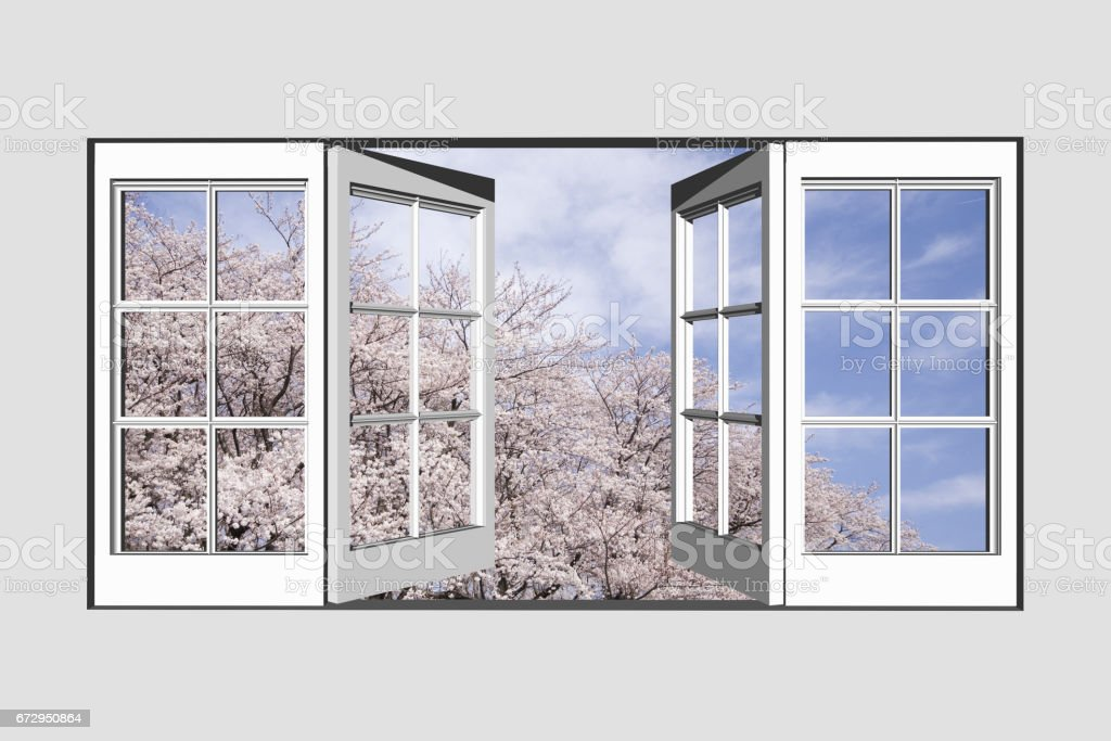 Windows from cherry blossoms Negishi forest park stock photo