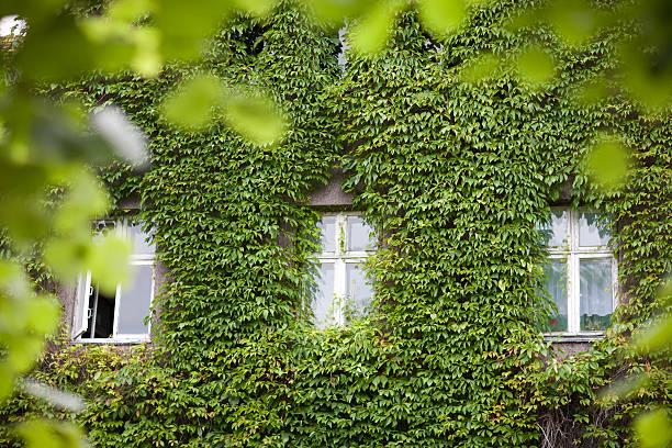 Fenster in Blätter – Foto