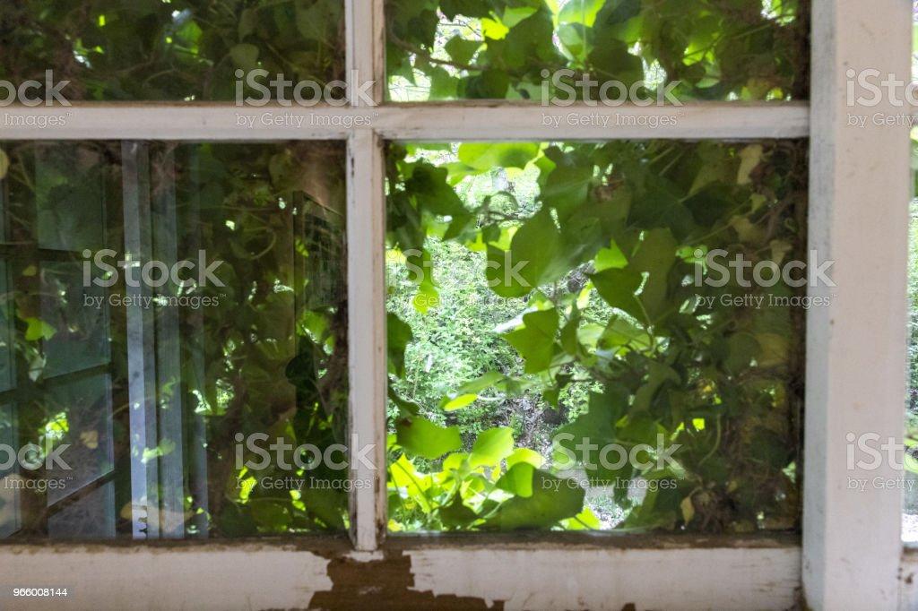Windows in der Natur - Lizenzfrei Baum Stock-Foto