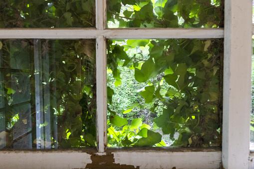 Windows In Der Natur Stockfoto und mehr Bilder von Baum
